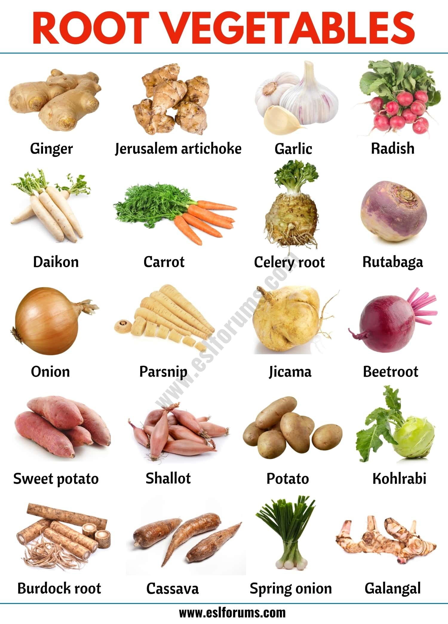 Root Vegetables: List of 20 Root Vegetables with ESL Picture!