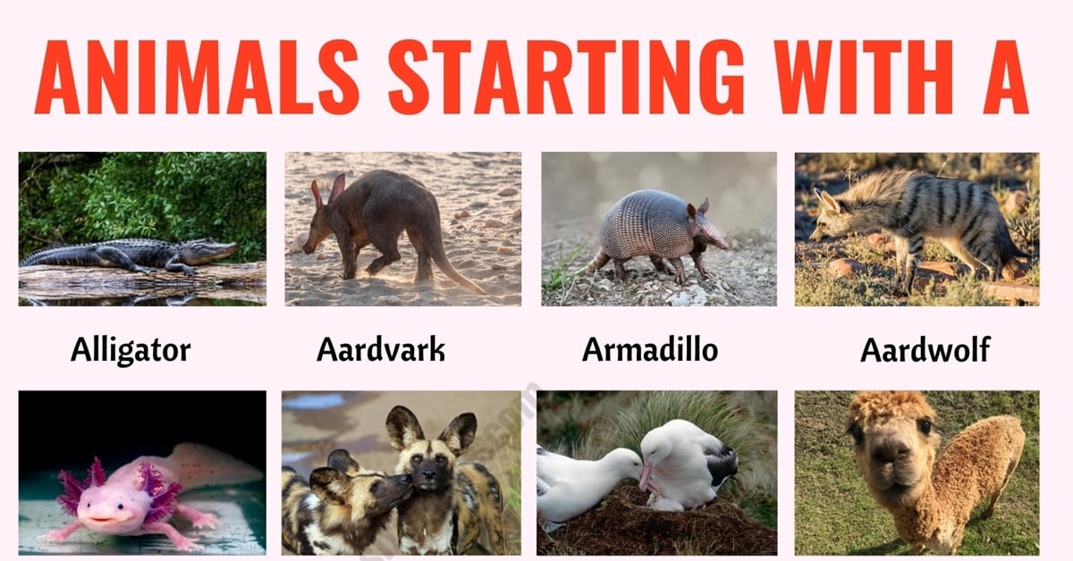 Animals that Start with A: List of 20+ Animals Starting with A in English 1