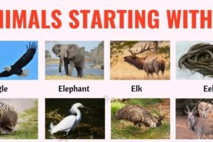 Animals that Start with E: List of 20+ Animals Starting with E with Useful Examples 6