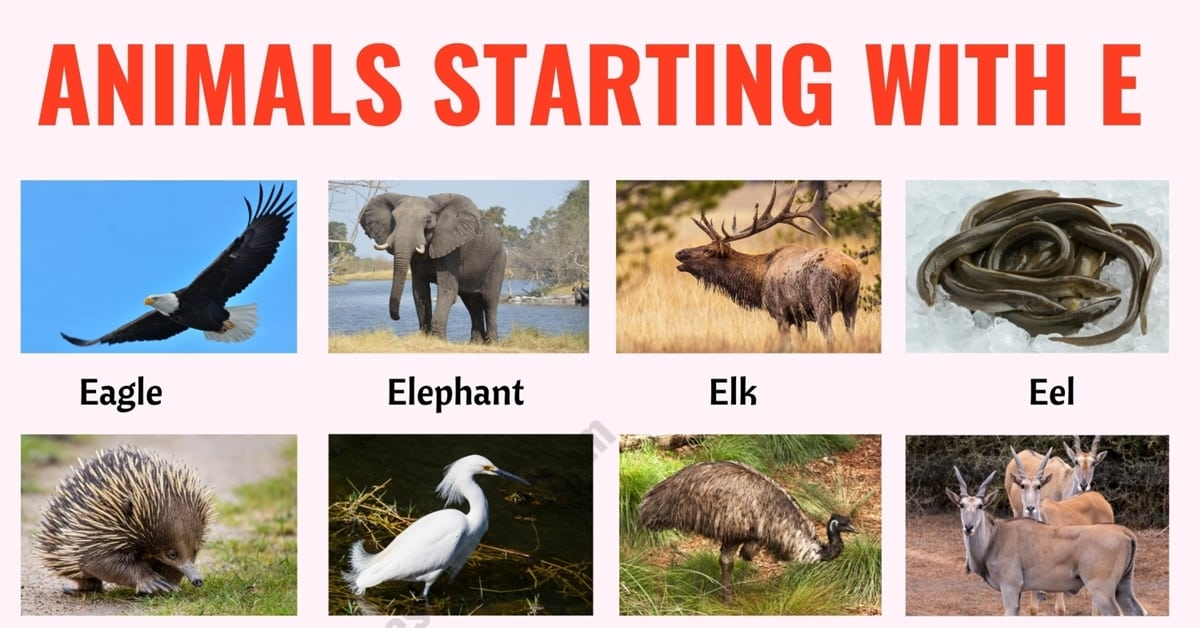 Animals that Start with E: List of 20+ Animals Starting with E with Useful Examples 1