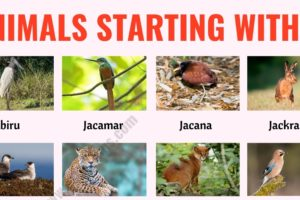 Animals that Start with J: List of 20+ Animals Starting with J with ESL Picture! 13