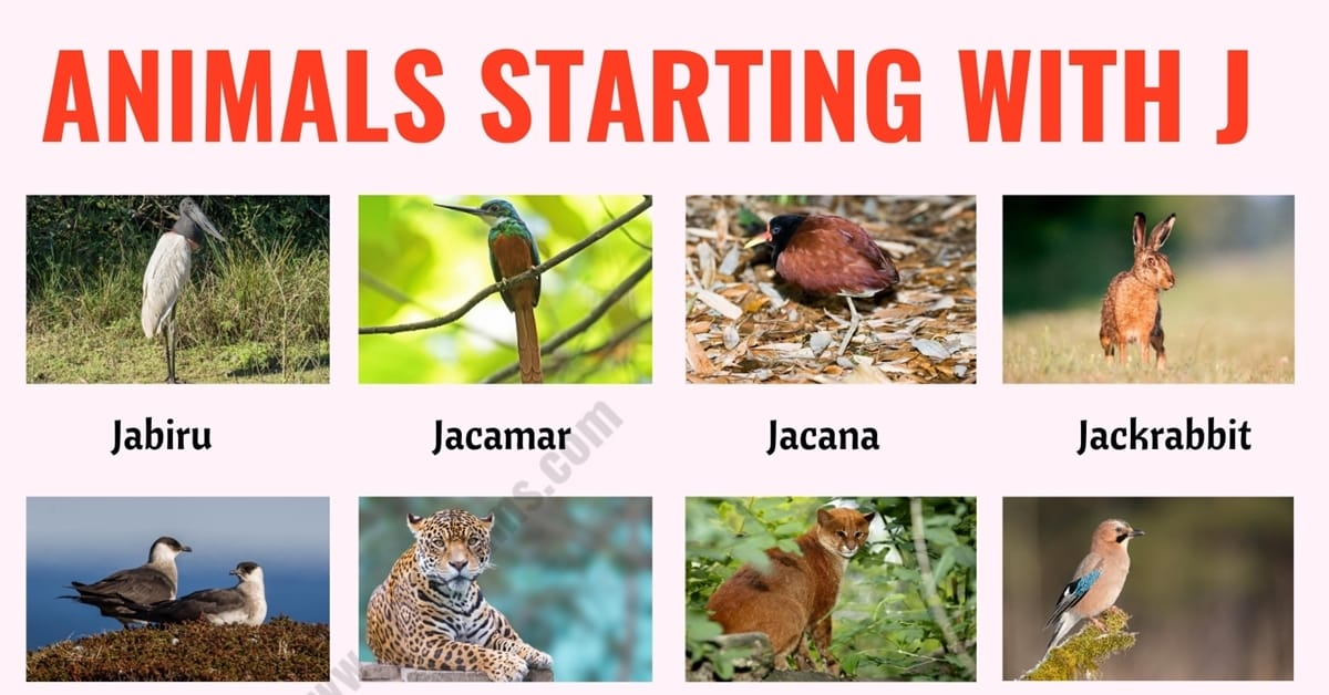 Animals that Start with J: List of 20+ Animals Starting with J with ESL Picture! 1