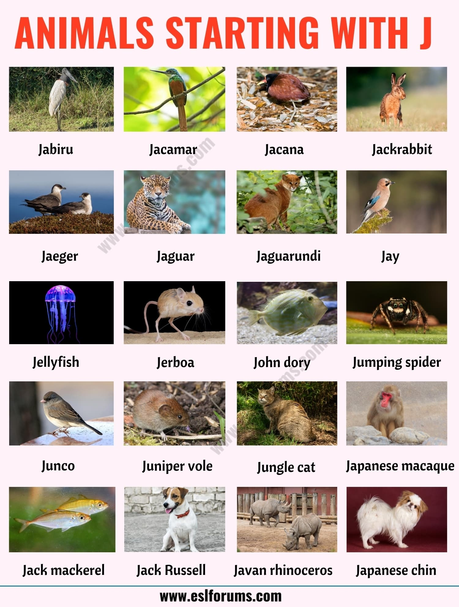 Animals that Start with J: List of 20+ Animals Starting with J with ESL Picture!