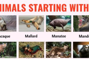 Animals that Start with M: List of 30+ Common Animal Names that Start with M in English 3