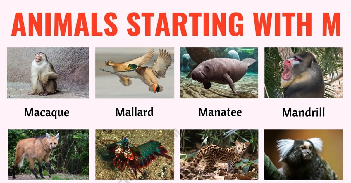 Animals that Start with M: List of 30+ Common Animal Names that Start with M in English 1
