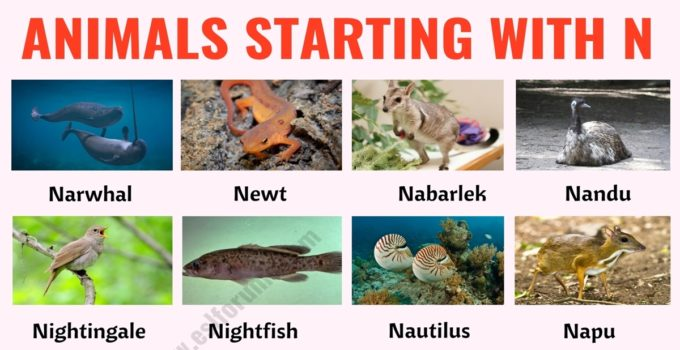 Animals that Start with N: List of 35+ Animals Starting with N in English 1
