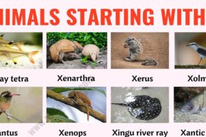 Animals that Start with X: List of 20+ Animals Starting with X with ESL Picture 9