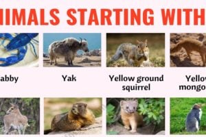 Animals that Start with Y: List of 23 Animals that Start with Y in English with ESL Picture 4