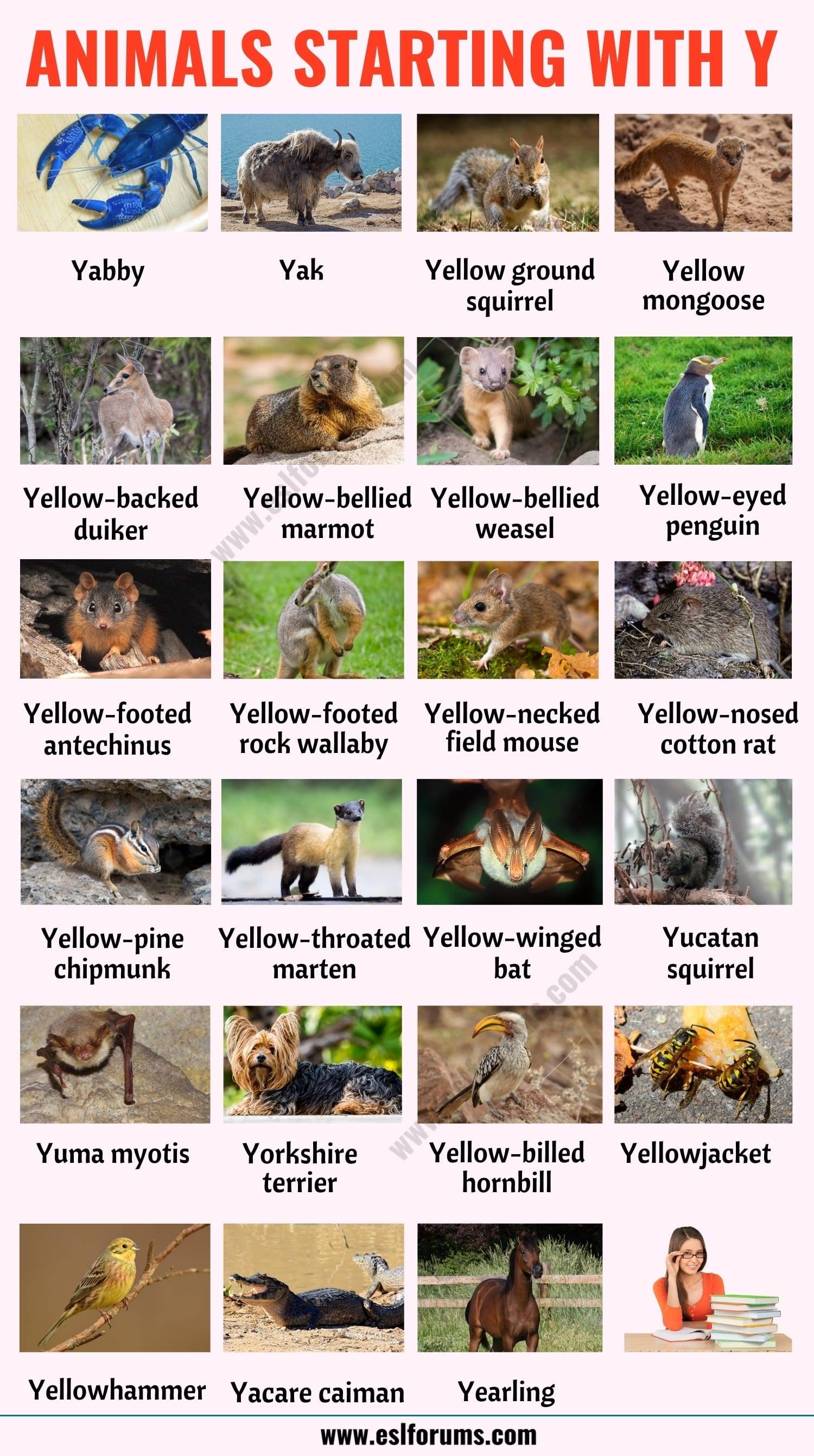Animals that Start with Y: List of 23 Animals that Start with Y in English with ESL Picture