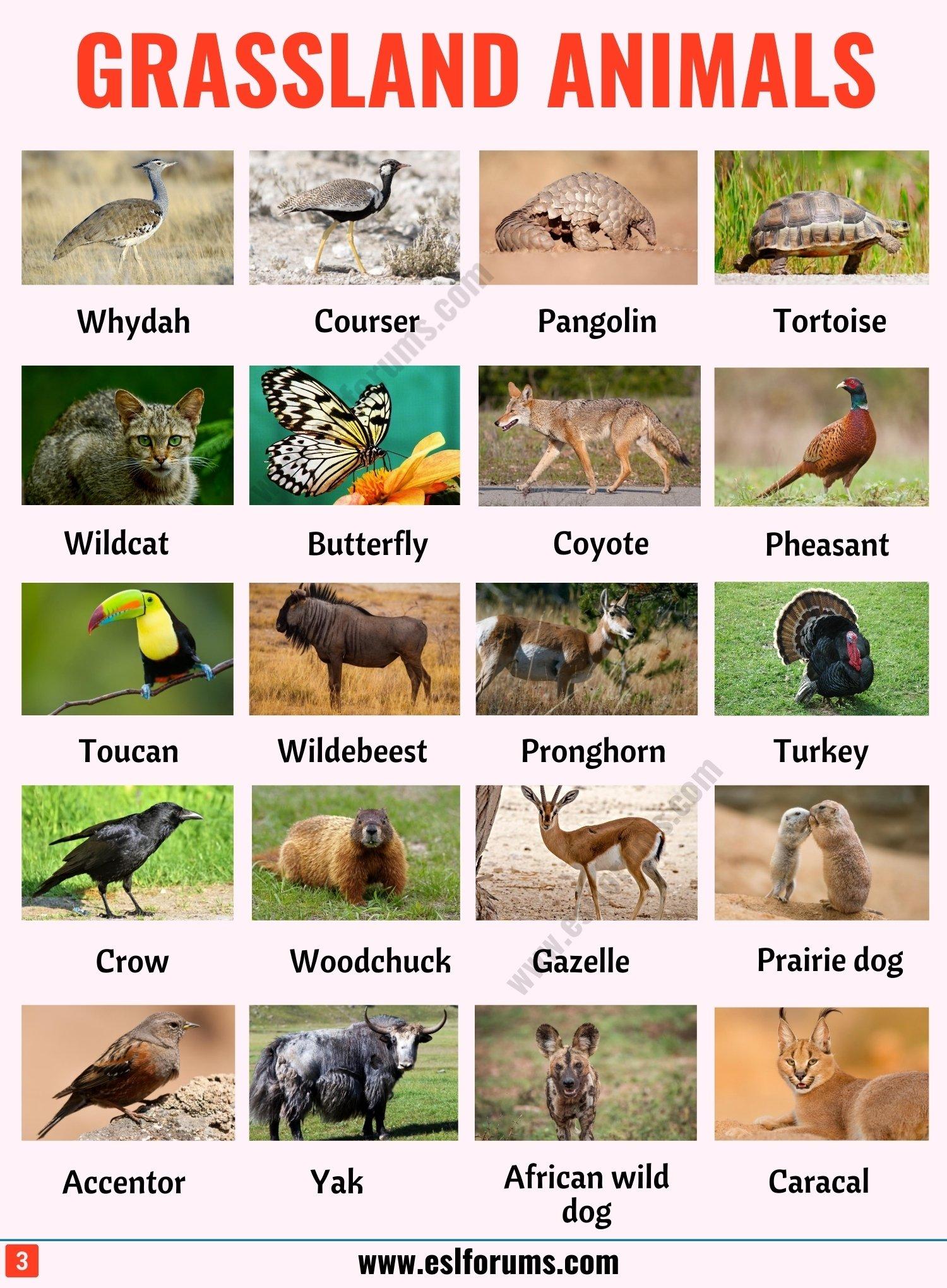 Grassland Animals: List of 80+ Grassland Animals in English with ESL Pictures