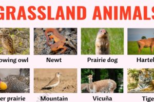 Grassland Animals: List of 80+ Grassland Animals in English with ESL Pictures 9