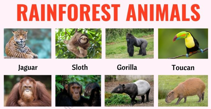 Rainforest Animals: List of 25+ Animals that Live in the Rainforest with ESL Picture! 1