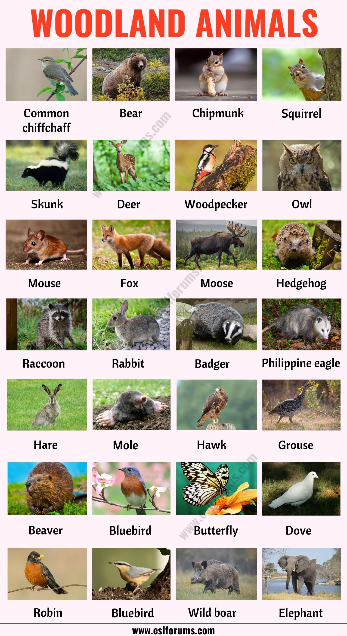 Woodland Animals: List of 25+ Woodland Animals with Example Sentences
