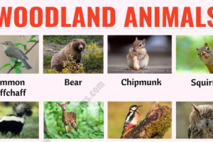 Woodland Animals: List of 25+ Woodland Animals with Example Sentences 5