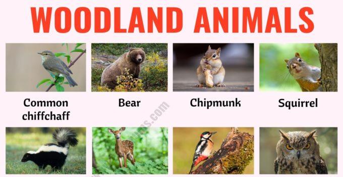 Woodland Animals: List of 25+ Woodland Animals with Example Sentences 1