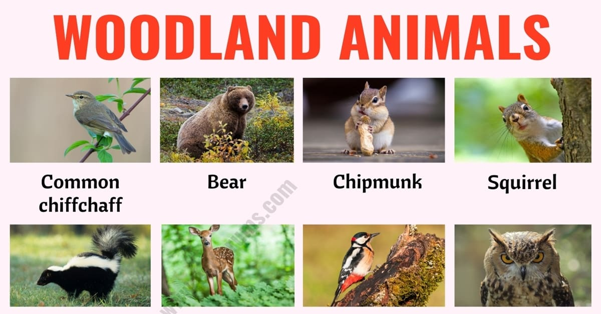 Woodland Animals: List of 25+ Woodland Animals with Example Sentences 6