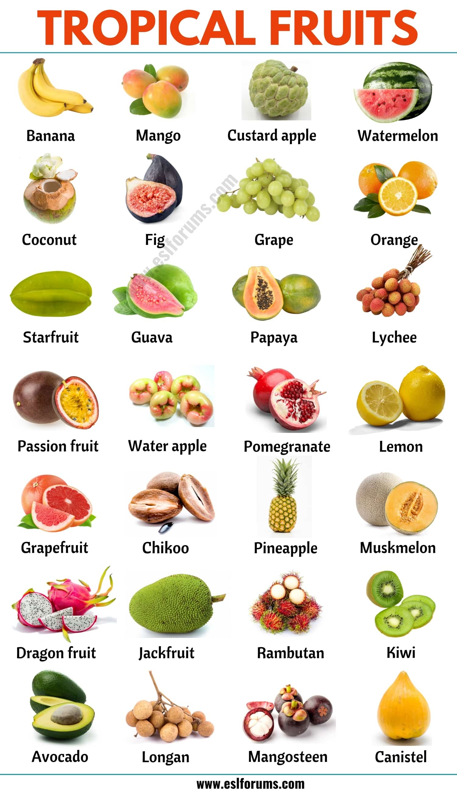 Tropical Fruits: List of 25+ Popular Tropical Fruits in English