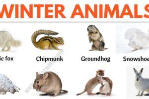 Winter Animals: List of 20+ Best Winter Animals in English 12