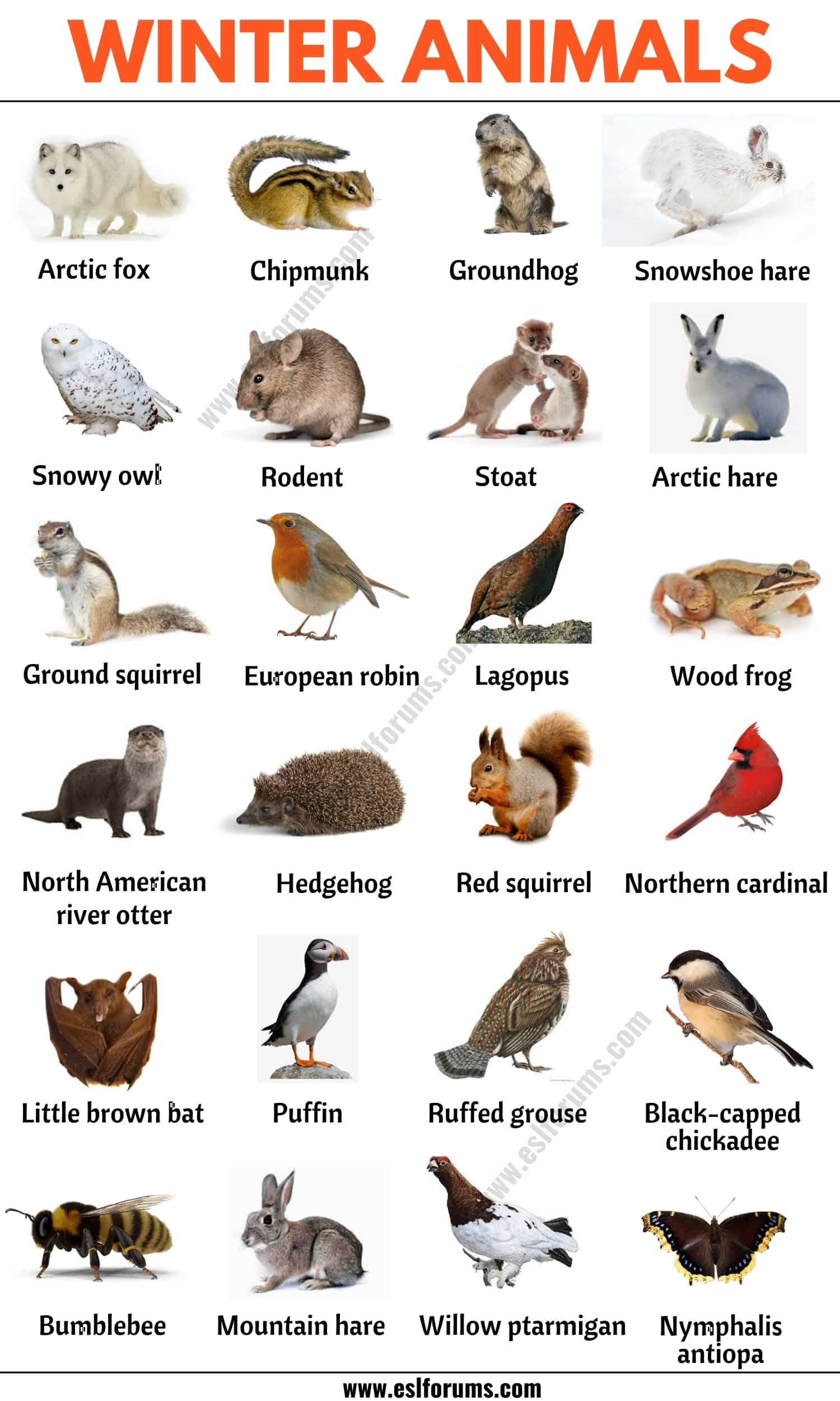 List of Animals: A Big Lesson of Animal Names with the Pictures!